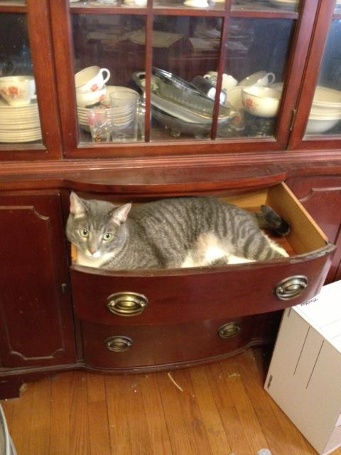 Cats love for drawers to be emptied!